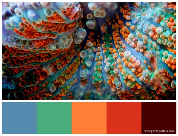 Colour and patterns in nature - Felix Salazar [1] | Pitter Pattern