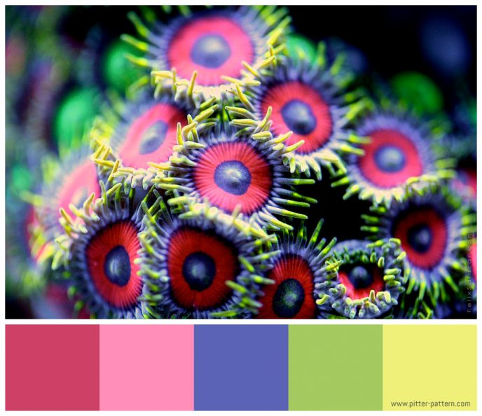 Colour and patterns in nature - Felix Salazar [2] | Pitter Pattern